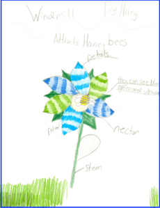 honey bee pollinated flower by student
