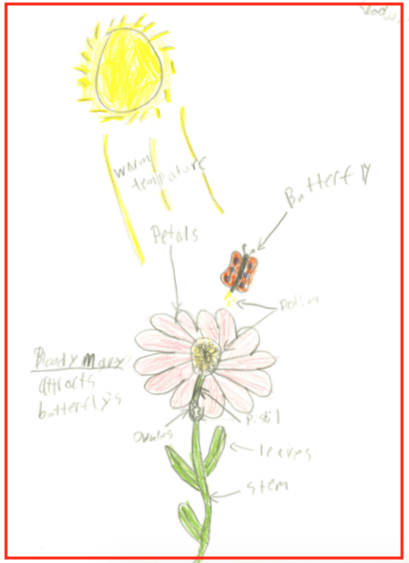 Student Drawing of a Butterfly Flower